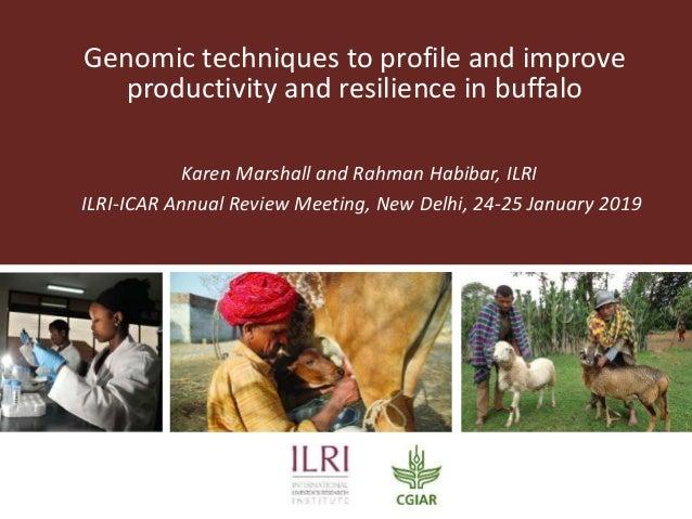 Genomic techniques to profile and improve productivity and resilience in buffalo Karen Marshall and Rahman Habibar, ILRI I...