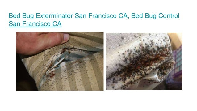 Bed bug inspections san francisco ca residential bed bug for Bed bugs san francisco