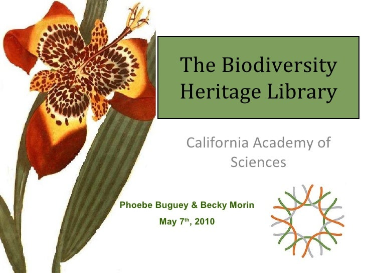 The Biodiversity Heritage Library California Academy of Sciences Phoebe Buguey & Becky Morin May 7 th , 2010