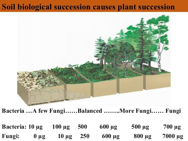 Image result for elaine ingram soil succession