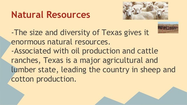 an analysis of the natural resources of texas Texas leads the united states in production of oil, cattle, sheep, hay, goats and cotton other agricultural products include poultry, eggs, milk, wheat, rice and peanuts.