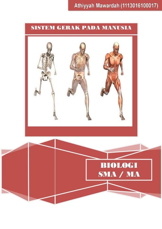 1000+ Gambar Cover Buku Yang Isinya Menjelaskan Tentang Otot Manusia  Terbaik