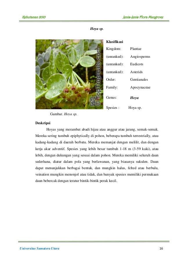 buku flora mangrove 21 638 - Jenis Jenis Mangrove Dan Gambarnya