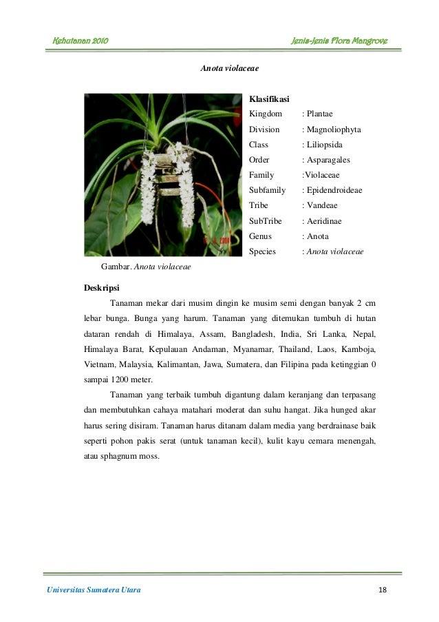 Filipina sri sinar - 3 4
