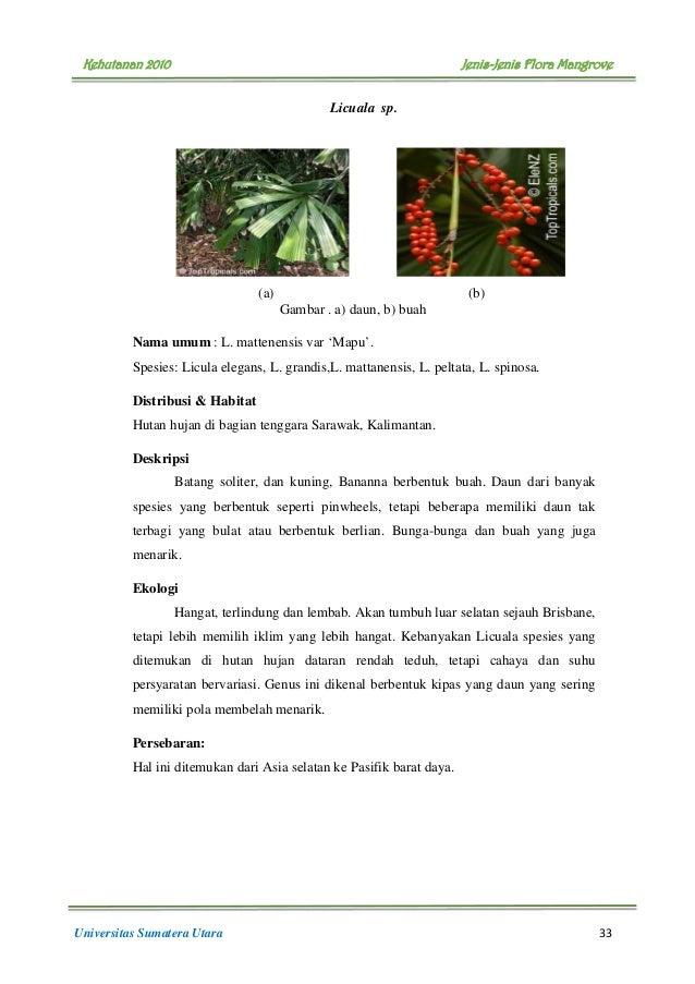 buku flora mangrove 38 638 - Jenis Jenis Mangrove Dan Gambarnya