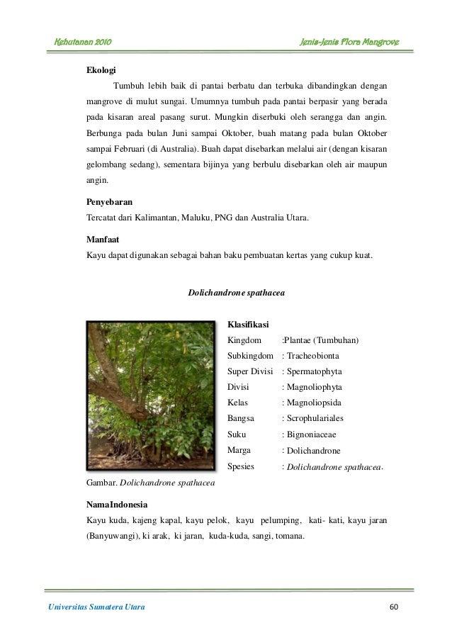 buku flora mangrove 65 638 - Jenis Jenis Mangrove Dan Gambarnya