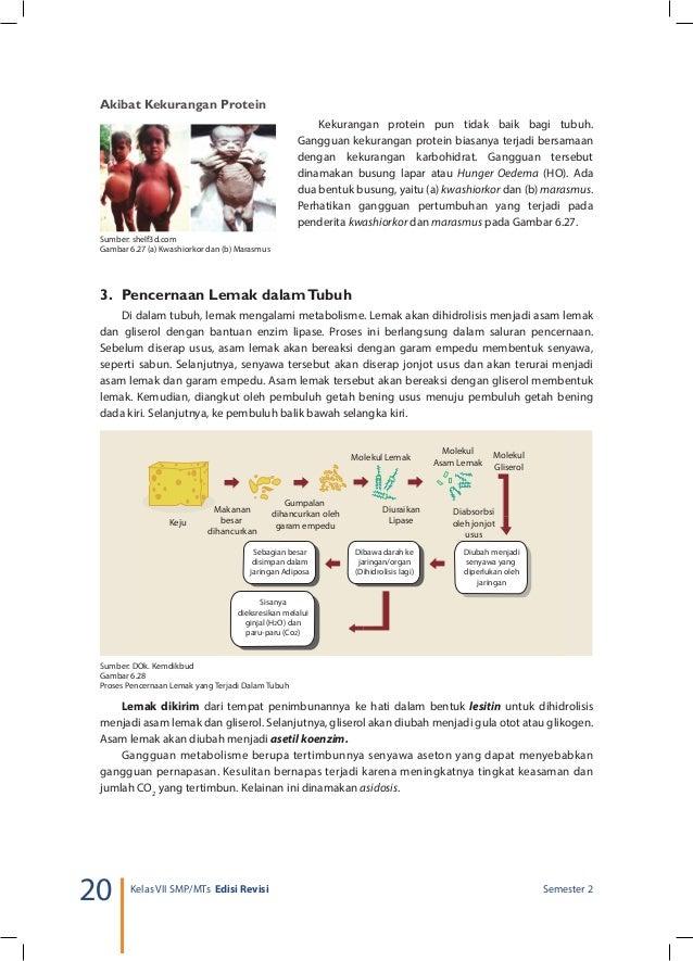 PROSES METABOLISME LEMAK