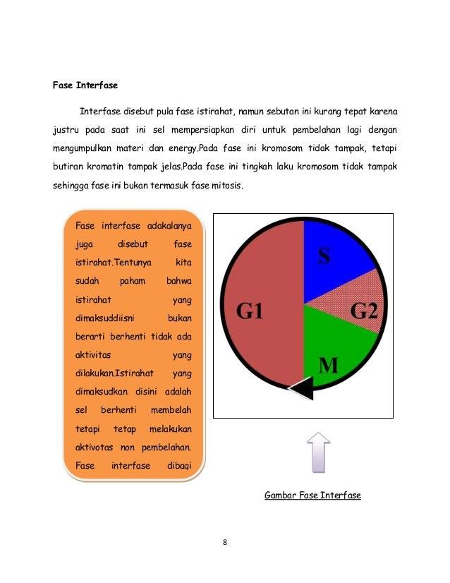 Buku pembelahan sel gambar pada fase telofase 9 ccuart Choice Image