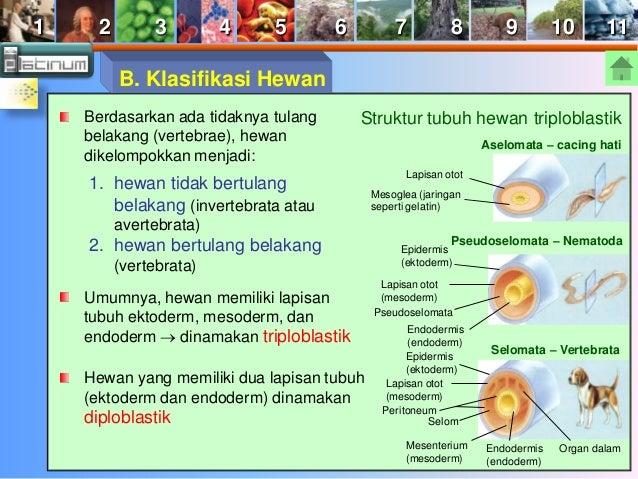 Eukariota - Animalia