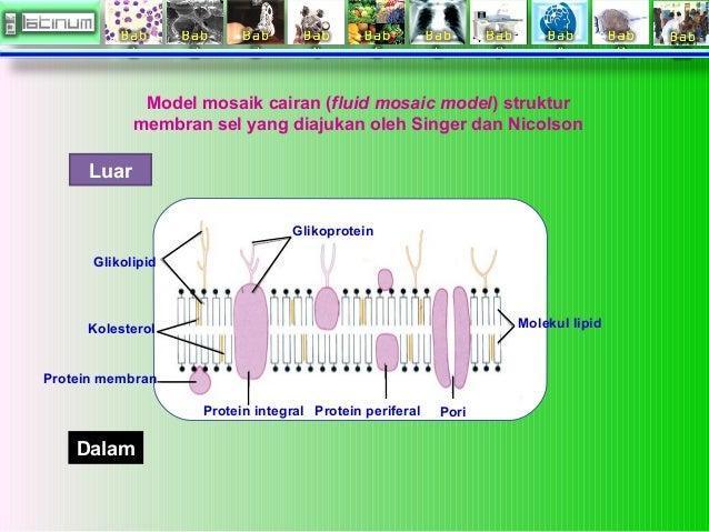 Biologi sel membran sel 10 ccuart Choice Image