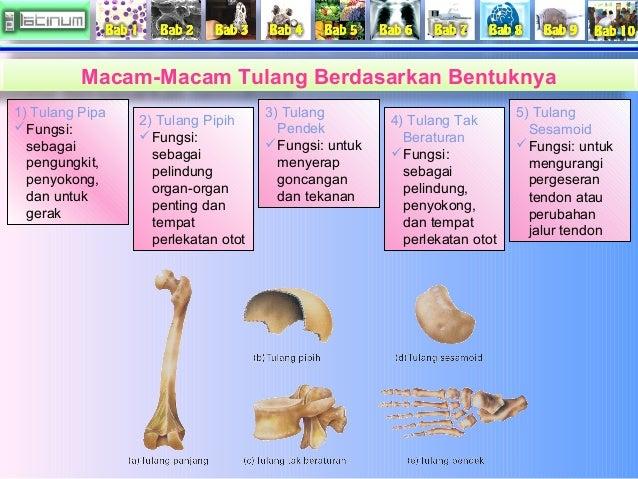 Hasil gambar untuk macam macam tulang berdasarkan bentuknya