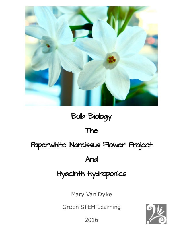 bulb biology  the paperwhite narcissus flower project and
