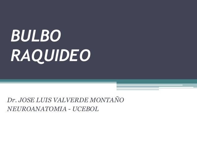 BULBO RAQUIDEO Dr. JOSE LUIS VALVERDE MONTAÑO NEUROANATOMIA - UCEBOL