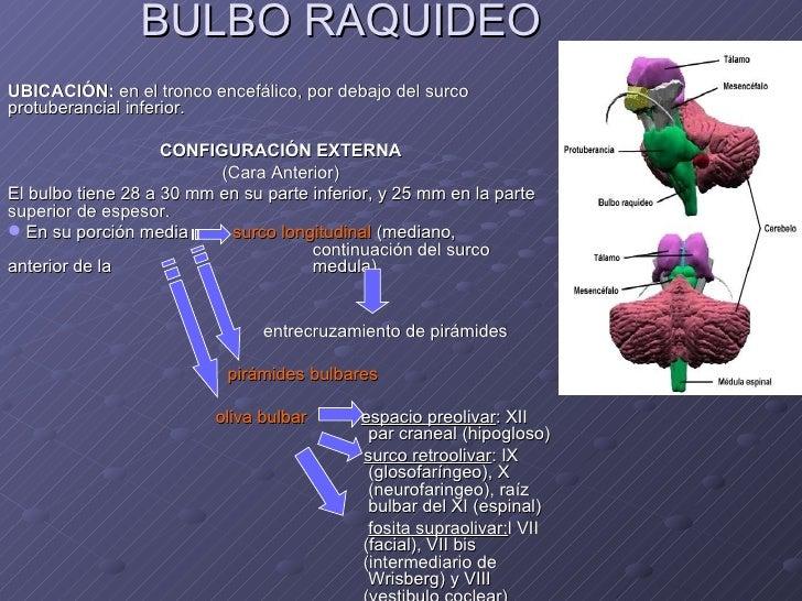 Bulbo Raquideo[1]