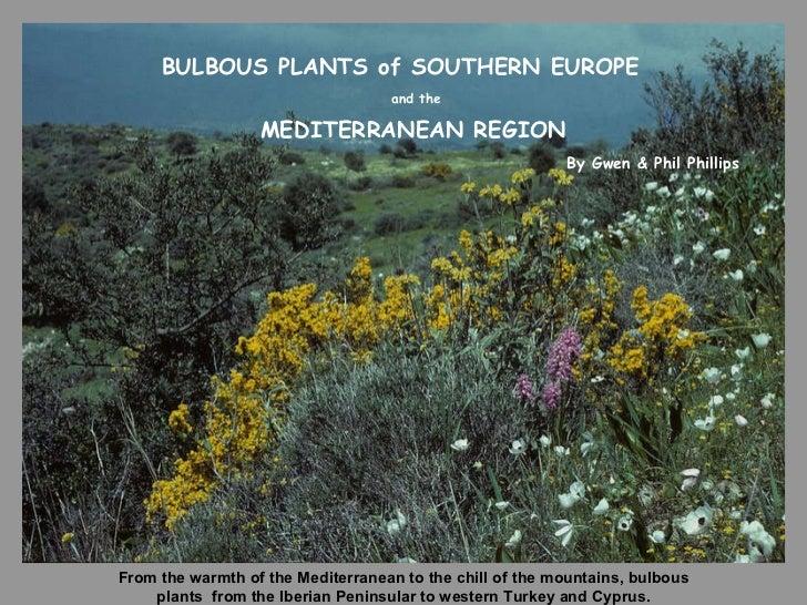 the bulbous plants of turkey