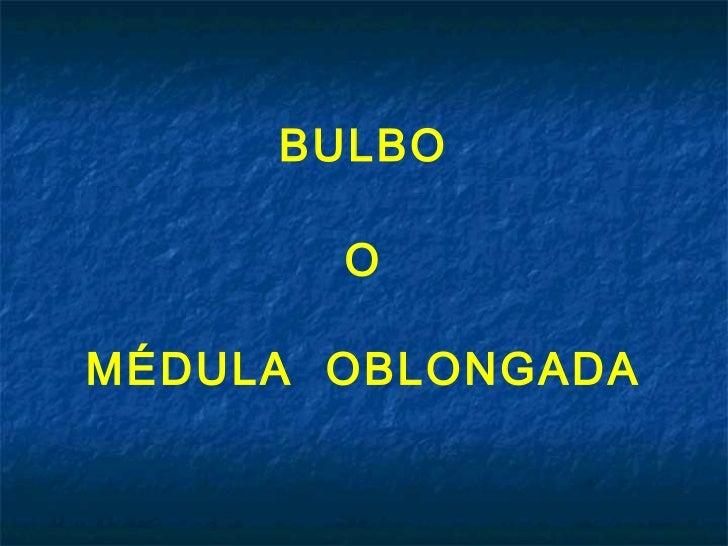 BULBO       OMÉDULA OBLONGADA