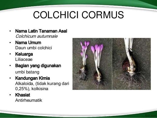 cormus