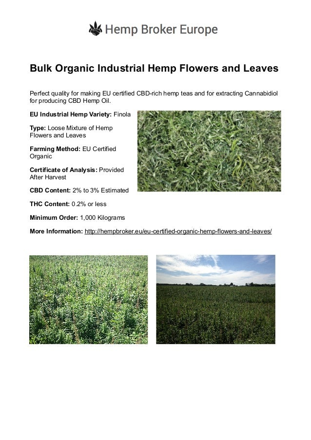 Bulk Organic Industrial Hemp Flowers and Leaves Perfect quality for making EU certified CBD-rich hemp teas and for extract...