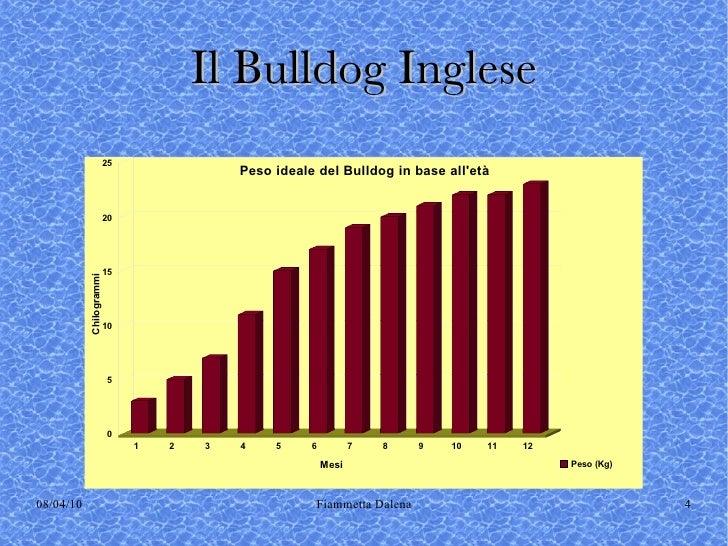 English Bulldog Weight Chart Rebellions