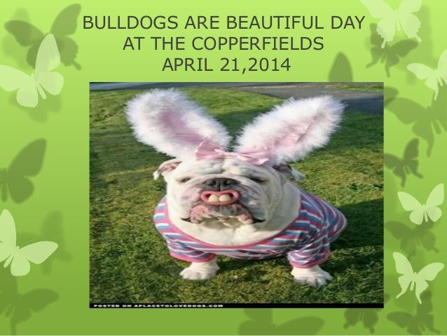 BULLDOGS ARE BEAUTIFUL DAY AT THE COPPERFIELDS APRIL 21,2014