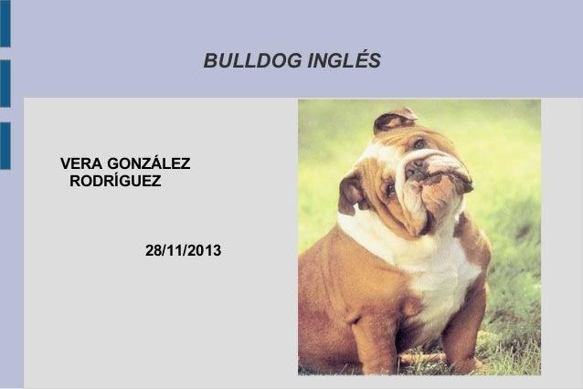 BULLDOG INGLÉS  VERA GONZÁLEZ RODRÍGUEZ  28/11/2013