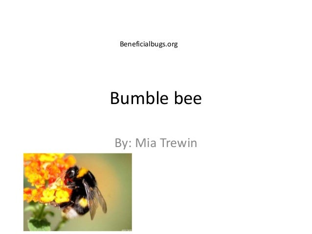 Bumble beeBy: Mia TrewinBeneficialbugs.org
