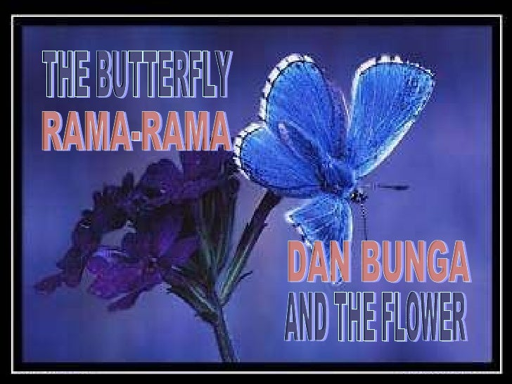 THE BUTTERFLY AND THE FLOWER RAMA-RAMA DAN BUNGA