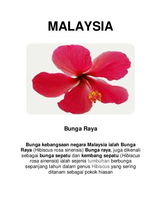 39 Paling Top Gambar Bunga Nasional Negara