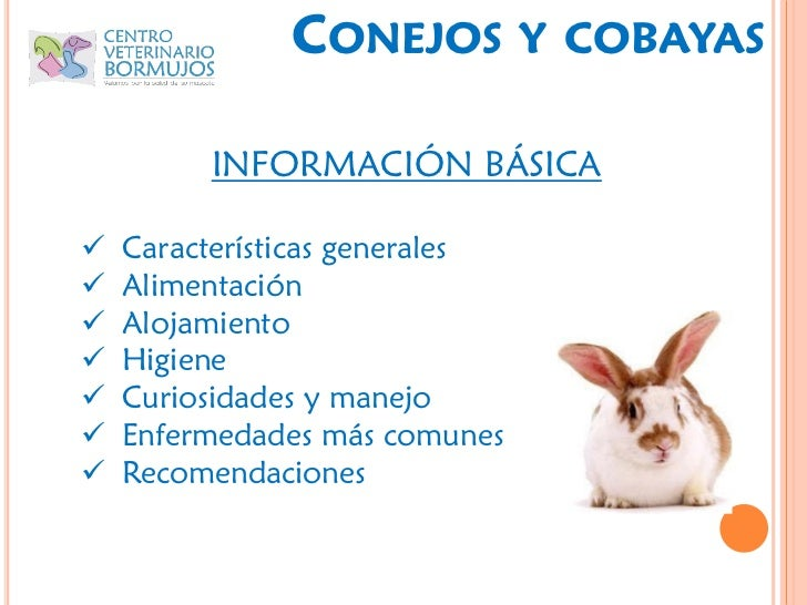 Bunny party - Informacion de cobayas ...