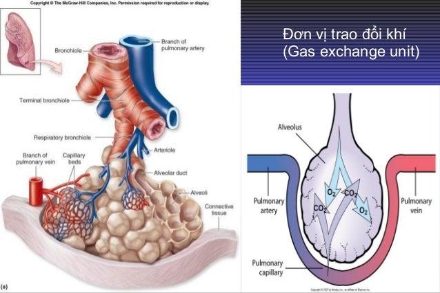 1. Giảm Oxy máu: Pa02: bình thường 80-100 mmHg (khí phòng) Nguyên nhân Pa02 giảm: các bệnh lý hô hấp, tim mạch gây cản trở...