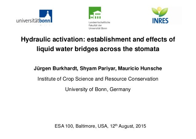 H d li ti ti t bli h t d ff t fHydraulic activation: establishment and effects of liquid water bridges across the stomata ...