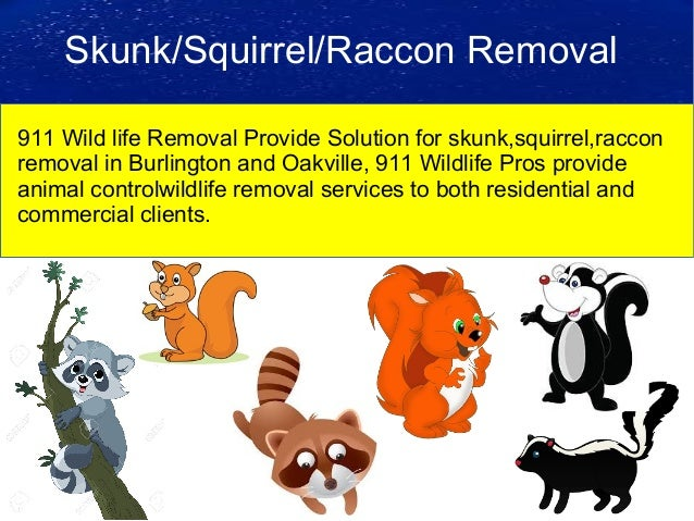 Burlington Animal Control Services 911 Wild Life Pros. Standardized Medicare Supplement Plans. Best Travel Search Engines Kansas City Bank. Retirement Planning Basics Health Fusion Emr. Interior Design Institue Jeep Sahara Off Road. Malpractice Attorney New Jersey. How To Make Own Business Credit Card Websites. Commercial Loans Los Angeles. Real Estate Lawyer In Los Angeles
