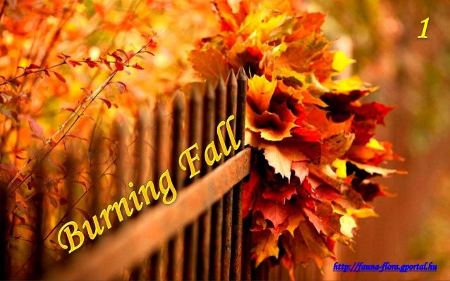 http://fauna-flora.gportal.hu