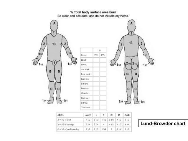 Appendix C Body Diagrams Rule Of Nines Child Abuse Evaluation