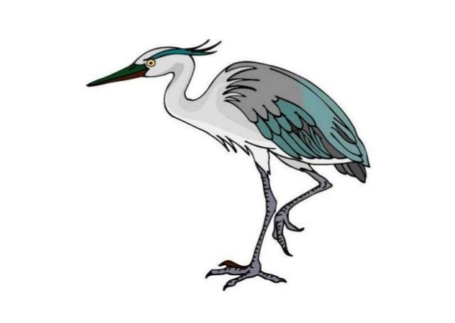 Burung Bangau