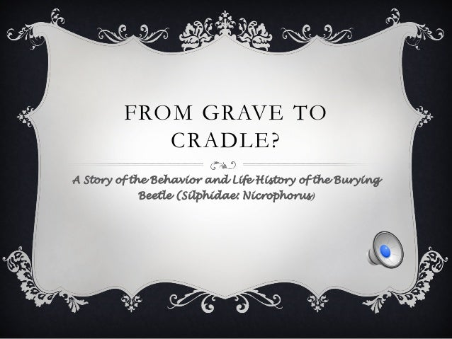 FROM GRAVE TO CRADLE? A Story of the Behavior and Life History of the Burying Beetle (Silphidae: Nicrophorus)
