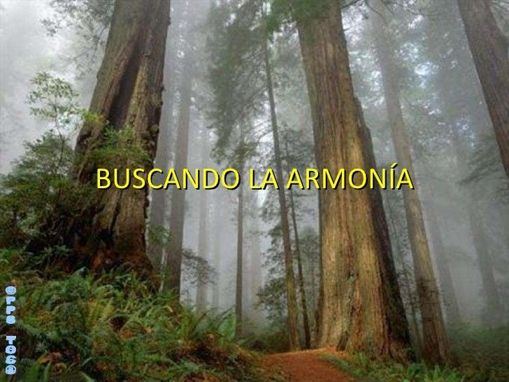 BUSCANDO LA ARMONÍA ©PPS TOC®