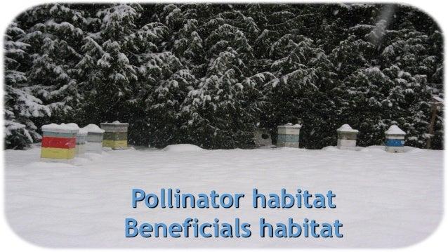 Pollinator habitat Beneficials habitat