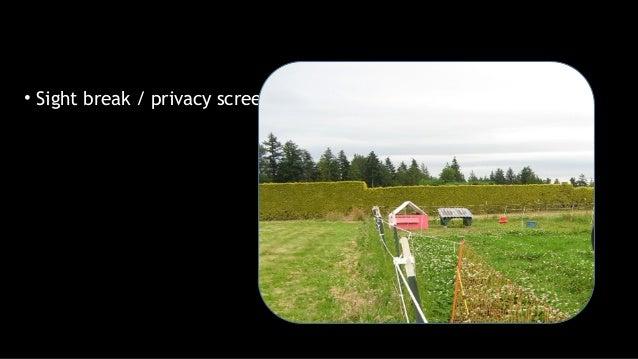 • Sight break / privacy screen