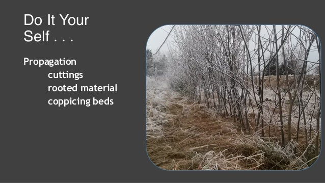 Do It Your Self . . . Propagation cuttings rooted material coppicing beds Maintenance water weed control