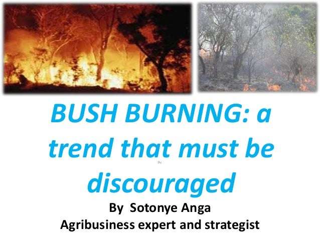 BUSH BURNING: atrend that must be                 By   discouraged         By Sotonye Anga Agribusiness expert and strateg...