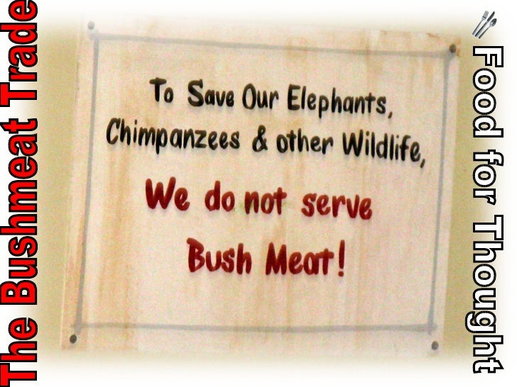 Food for Thought The Bushmeat Trade