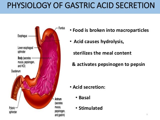 PHYSIOLOGY OF GASTRIC ACID SECRETION  • Food is broken into macroparticles  • Acid causes hydrolysis,  sterilizes the meal...