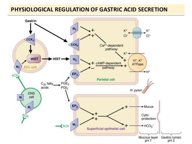 8  PHYSIOLOGICAL REGULATION OF GASTRIC ACID SECRETION