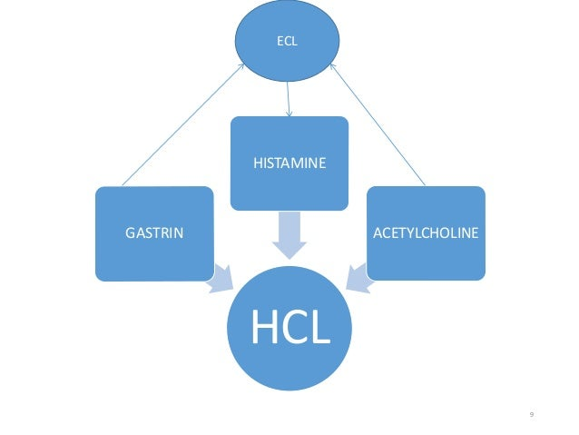 HCL  GASTRIN  HISTAMINE  ACETYLCHOLINE  9  ECL