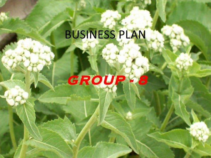 BUSINESS PLAN GROUP - 8