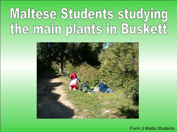 Maltese Students studying the main plants in Buskett