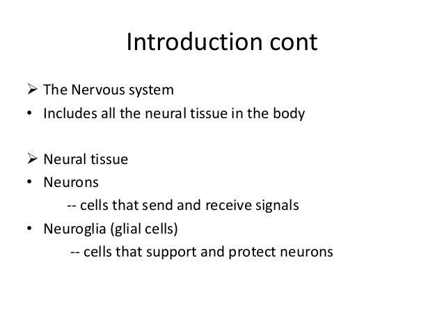butler mobilization of the nervous system pdf