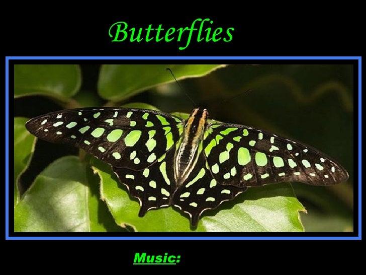 Butterflies Music :   Butterfly