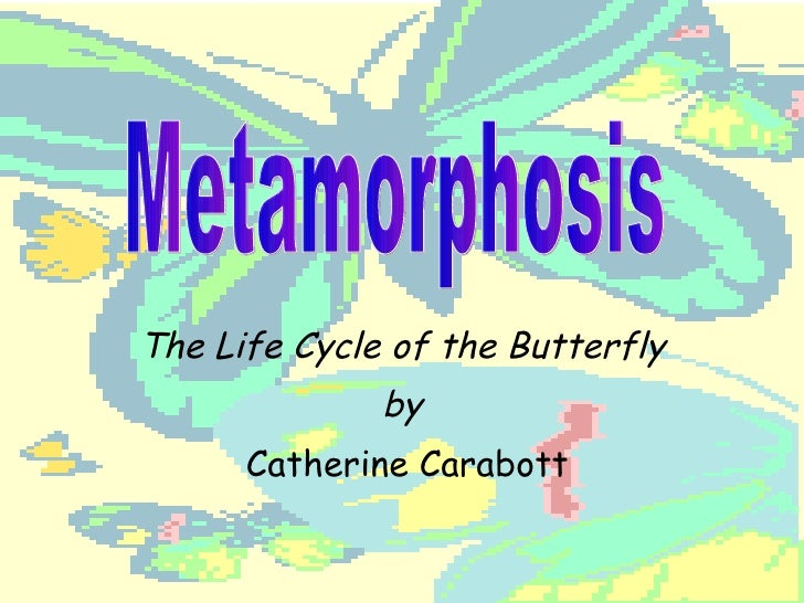 The Life Cycle of the Butterfly by Catherine Carabott Metamorphosis